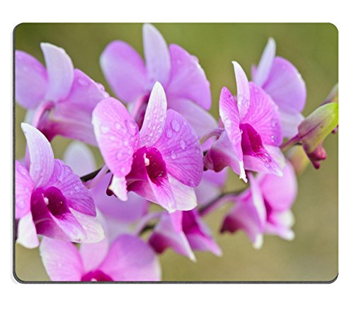 Luxlady Gaming Mousepad IMAGE ID: 23042534 Dendrobium orchid hybrids is white and pink stripes in Thailand