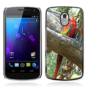 Hot Style Cell Phone PC Hard Case Cover // M00116159 Ara Parrot Plumage Colorful Bird // Samsung Galaxy Nexus GT-i9250 i9250