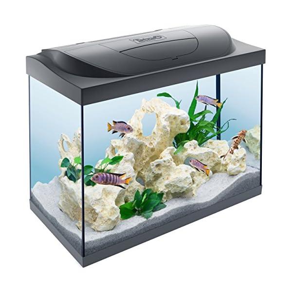 como-montar-um-aquário-tetra-starter