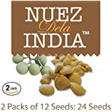 Nuez de La India 100% Original Authentic Indian Nut Weight Loss - 2 Pack of 12 Seeds (Total of 24 Seeds)
