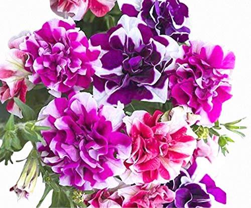 Tumbelina Ruffles Hanging Mix Petunia Seeds UPC 695928806690 +1 Plant Marker (100)