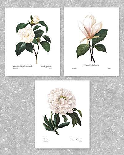 (Set of 3) Botanical Prints (White Home Decor Room, Redoute Flower Wall Art) Camellia, Peony, Magnolia - 8x10 Unframed (Decor Parisian Room)
