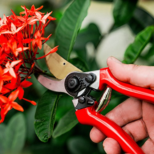 Professional Pruning Shears with Titanium Coated Blades - Lightweight Gardening Tools for Comfortable Use - Find Your Green Thumb with Rust Resistant Cutters That Stay Sharp Longer by Green Heart (Image #8)