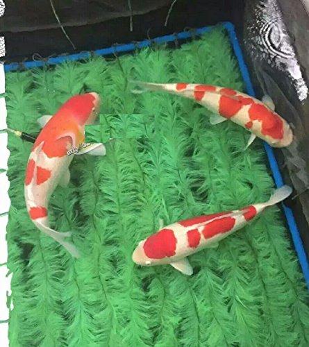 Koi Fish Breeder Fry Net Spawning Rope/ Brush 39