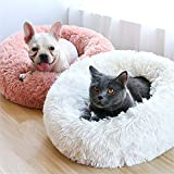 Small Dog Beds Review and Comparison