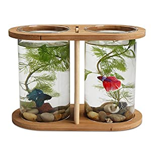 Betta fish bowls segarty cool design small for Betta fish tanks amazon