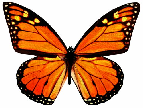 Paper House Productions Jigsaw Shaped Puzzle 26 by 20-Inch, Monarch in Flight (500 Pieces)