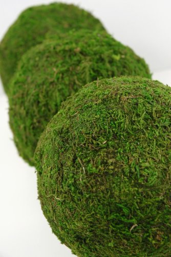 Tree Ball Moss (6 Pieces of Moss Balls Natural 6in. Covered in Natural Sheet Moss & Measure 6in. in Diameter. Great For A Garden Party)
