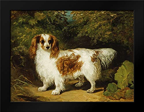 - A Blenheim Cavalier King Charles Spaniel Framed Art Print by Willis, H.