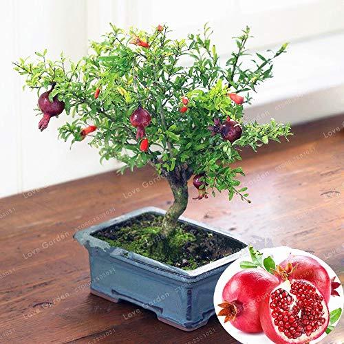 (MAPPLEGREEN 20 Pcs/Bag Bonsai Pomegranate Bonsai Very Sweet Delicious Fruit Bonsai Succulents Tree Bonsai Plant for Home Garden Pot)
