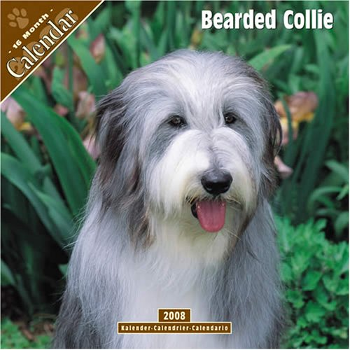 Bearded Collie 2008 Wall Calendar