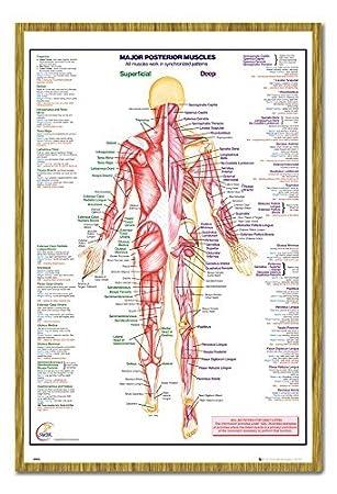 Menschlichen Körper Major Arteria Muskeln Poster Magnettafel ...