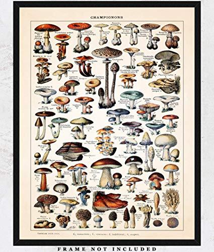 Vintage Mushroom Wall Art Print: Unique Room Decor for Boys, Girls, Men & Women - (11x14) Unframed Picture - Great Gift Idea ()