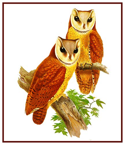 Orenco Originals Bay Owls by Naturalist John Gould Birds Counted Cross Stitch -