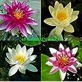 Plantas y flores para estanques