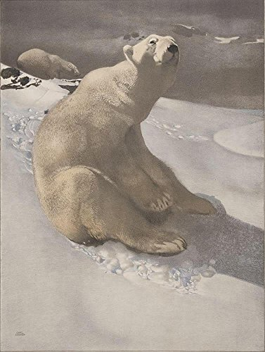 (Vintage Art Poster - A polar bear seated on snow and another polar bear walki...)