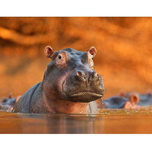 - 24x34cm 5D Diamond Painting Hippopotamus Diamond Embroidery 3D Painting DIY Picture Diamond Mosaic Craft Decoration