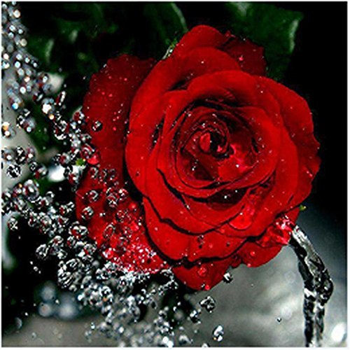 Vacally 5D DIY Diamond Painting ,Diamond Painting by Number Kits for Adults Drill Rhinestone Embroidery for Wall Decoration,Red Flower