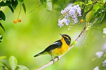 Amazon Com Egotou Birds Spring Flowers Art Print On Canvas