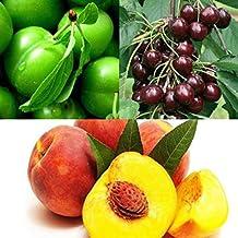 MIXED GRAFTED FRUIT TREE Saplings(1 Plum +1 SweetCherry+ 1 Peach)