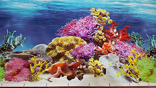 New!! 19.5 Inch Height Double Sided Aquarium Background Colorful Coral Decorations (60''(L) x 19.5''(L))