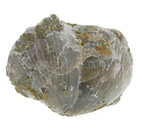 CrystalAge Brachiopod Fossil