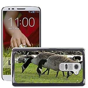 Grand Phone Cases Etui Housse Coque de Protection Cover Rigide pour // M00140593 Patos Flock patos waterfowl // LG G2 D800 D802 D802TA D803 VS980 LS980