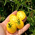 Tomato Garden Seeds - Garden Peach - Non-GMO, Heirloom, Vegetable Gardening Seed
