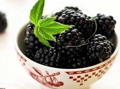 Organic 50 Blackberry Seeds Black Berry Giant Blackberries Triple Crown Mulberry