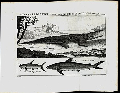 Young Alligator Cat Fish African Aquatic Animals 1745 antique engraved print