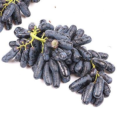 wpOP59NE 30Pcs Rare Black Grape Seeds Bonsai Plants Courtyard Fruit Garden Potted Decor Plant Seeds : Garden & Outdoor