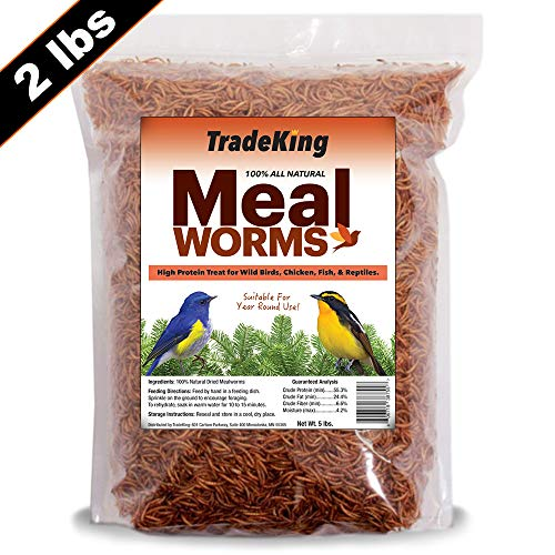 TradeKing 2 lb Dried Mealworms - High Protein Treat for Wild Birds, Chicken, Fish & Reptiles (Best Bird Seed For Bluebirds)