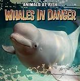 Whales in Danger, Michael Portman, 1433958163