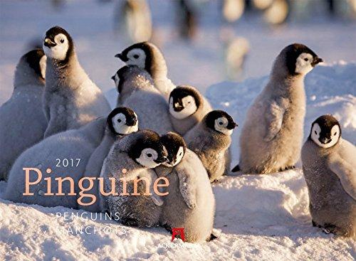 Pinguine 2017