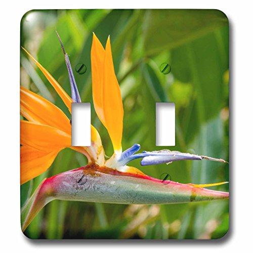 3dRose Danita Delimont - Flowers - Bird of Paradise, Strelitzia reginae, Kauai, Hawaii. - Light Switch Covers - double toggle switch (lsp_259220_2) by 3dRose