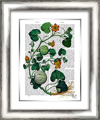 (Squash Vine 2 20x24 Silver Contemporary Wood Framed and Double Matted Art Print by Fab)