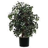 Vickerman TXX0740-06 Everyday Sakaki Bush, Green Dark, 4'