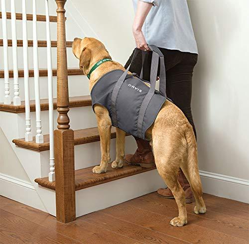 Orvis Dog Lift, Gray, Large