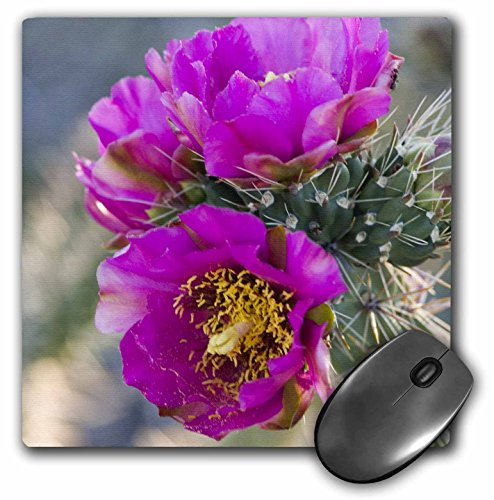 3drose-8-x-8-x-025-inches-mouse-pad-new-mexico-tree-cholla-cactus-succulent-mp-92990-1