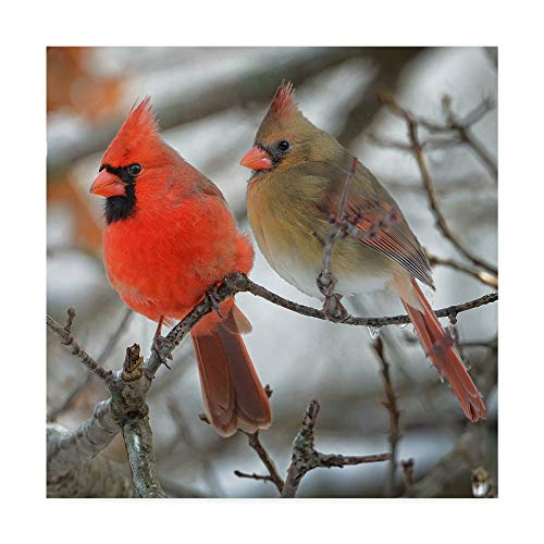 Trademark Fine Art Yard Flag Pair of Cardinals Cropped by Cl