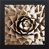 16x16 Desert Plants II by Stefko, Bob: Studio Black PSSFK-157