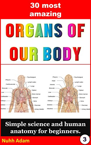Biology For Beginners The 30 Most Amazing Organs Of Our Body
