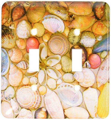 (3dRose lsp_155651_2 Seashells Photography Colorful Sea Shells Pattern Sea Ocean Seaside Nautical Beach Feel Decor Double Toggle Switch)