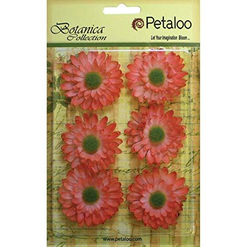 (PETALOO Botanica Gerbera Daisies 1.75