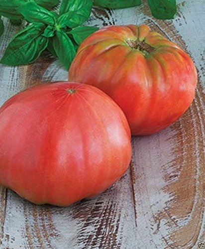 Pink Brandywine, Sudduth's, Heirloom Tomato 50 Seeds)Great for Sandwiches&salads