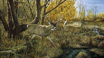 Old Mossy Horns - Ron Van Gilder - Old Mossy Horns - Deer