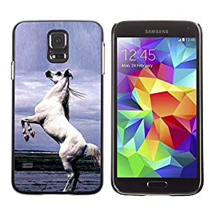 Graphic4You Arabian Stallion Horse Animal Design Hard Case Cover for Samsung Galaxy S5 by lolosakes