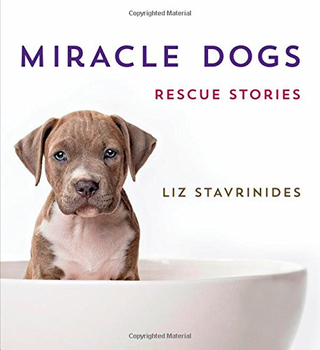 Download Miracle Dogs: Rescue Stories ebook