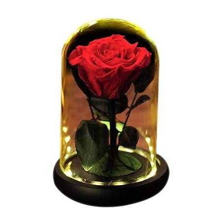 ALYR Conservada Flor, Rosa eterna Rosa Encantada Caja de ...