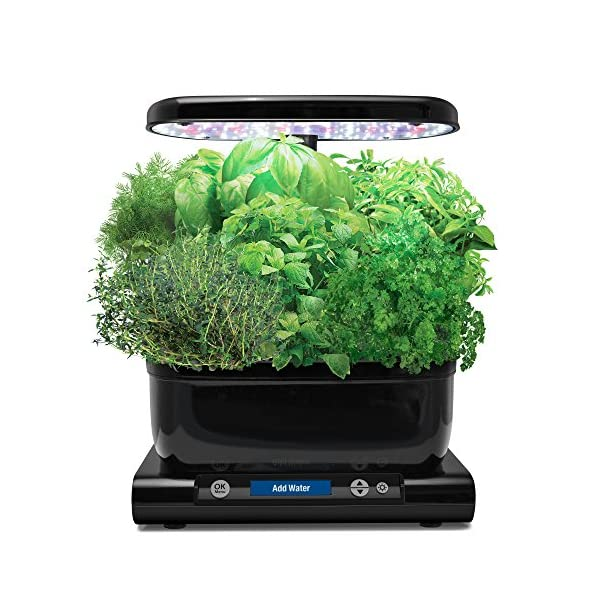 AeroGrow-Miracle-Gro-AeroGarden-Harvest-Black-with-Gourmet-Herb-Seed-Pod-Kit